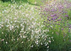 Mooie combi Verbena en Gaura Garden Nook, Sun Garden, Garden Trees, Garden Plants, Prairie Planting, Prairie Garden, Front Gardens, Outdoor Gardens, Landscape Design