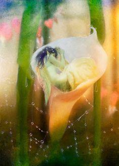 A fairies nest, Aimee Stewart