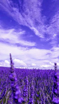 Lavendel in der Toskana gibt es riesen Felder davon. the smell is amazing Lavender in Tuscany the Lavender Aesthetic, Flower Aesthetic, Purple Aesthetic, Purple Wallpaper, Flower Wallpaper, Nature Wallpaper, Disney Wallpaper, Wallpaper Backgrounds, Iphone Wallpaper