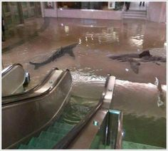 Filling The Ol' Shopping Mall Up With Sharks  | 15 Extremely Sour Pranks