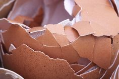 Eggshells are a great natural organic fertilizer and pest control for anyone's garden. Learn how to use them properly for best results in this article! Organic Fertilizer, Organic Gardening, Gardening Tips, Organic Pesticides, Gardening Services, Gardening Gloves, Container Gardening, Lifehacks, Get Rid Of Lizards