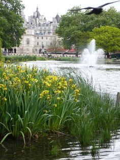 Buckingham Palace - St.James Park, London