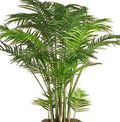 Le piante da appartamento ossigenano l'ambiente, depurano l'aria, contrastano l'umidità, eliminano i cattivi odori e rendono la casa più accogliente ed elegante. Gli scienziati della NASA hanno sco...