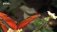 Butterflies, Bees & Wasps in slow motion on Vimeo