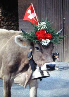 Schaussi's Alpen Schatz | Classic Swiss Cowbells for all Occasions Switzerland…