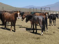 Nevada BLM will give you $1000 to adopt a wild horse http://provodh.com/3oywp