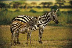 Safari im Krüger National Park