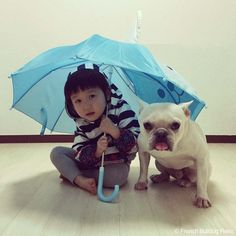 ハリケーン #frenchbulldog #フレンチブルドッグ