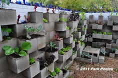 Vertical raised bed made of concrete blocks.