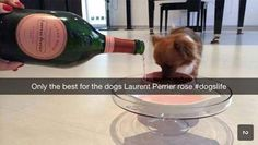 Even More Rich Kids Of Snapchat (19 Photos)