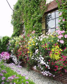 """""""The big window boxes are the star of the summer show."""""""