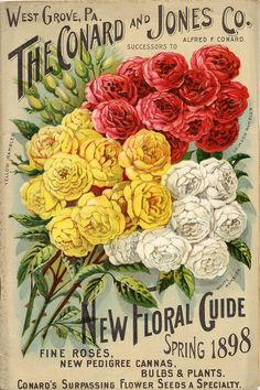 roses jolies roses