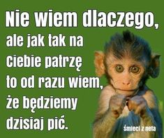 A może nie  będziemy mieli okazji Weekend Humor, Humor Grafico, Man Humor, Funny Cute, I Laughed, Dream Catcher, Cute Animals, Jokes, Motivational Quotes