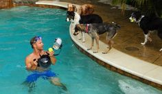This California photographer (sorry I don't know his name) took these dogs at play underwater