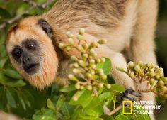 O Brasil Secreto revela as belezas do Pantanal para você! Brasil Secreto, Pantanal. #NatGeo Confira conteúdo exclusivo no www.foxplay.com