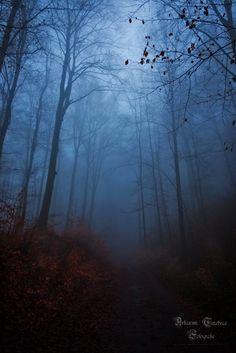 Durch den Nebelwald Teil 1 - Arkanum Tenebrae Fotografie