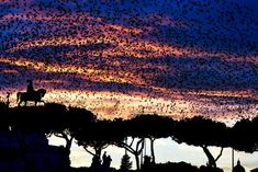 A murmuration of starlings flies over the Altare della Patria monument in Rome. Authorities have enlisted falcons to scare off defecating starlings. Rome Travel, Travel And Tourism, Travel Tips, Cool Photos, Beautiful Pictures, Environmental News, Picture Editor, Pictures Of The Week, Tonne