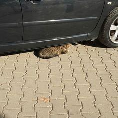 #cat #sun #sunday   ✌