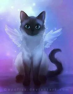 The Cat Fairy.ahhhh My TuXedo.we love you xox Angel cat Siamese Anime Animals, Baby Animals, Cute Animals, Gato Angel, Image Chat, Cute Animal Drawings, Cat Wallpaper, Rainbow Wallpaper, Cat Drawing