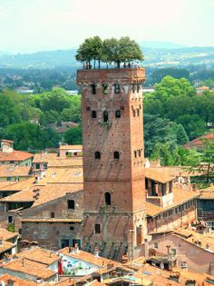 Guinigi Tower, Lucca. Italy. Photo via operalucca.org.