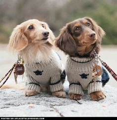 Dogs and Puppies - What Anyone Who Owns A Dog Needs To Know * Check out this great article. #DogsandPuppies