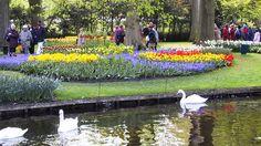 Keukenhof Garden Tourism, Netherlands - Next Trip Tourism