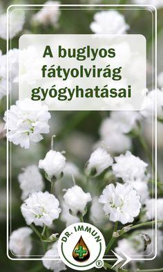 Ez a csodálatos apró virág a népgyógyászat által nagyra értékelt gyógynövény. Melyet számos gyógyhatása miatt már régóta alkalmaznak különböző egészségügyi problémák esetén. Eláruljuk Önnek, hogy melyek ezek a  jótékony hatások! Népies neve: dercefű, magyar szappangyökér, boglyas fátyolvirág, szappangyökér, patikai tajtékozófű, ebmankóró, rezgő.  Hurutos megfázás esetén kiváló teakeverék: hársfavirág, lándzsás útifű, kerti kakukkfű, orvosi zilisz, tüdőfű. Health 2020, Herb Garden, Natural Remedies, Medical, Herbs, Tea, Therapy, Herbs Garden, Medicine