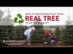 This Week in the Garden: What to Do with your Christmas tree after taking it down Holiday Tree, Christmas Trees, Reuse Recycle, Recycling, Garden, Xmas Trees, Garten, Recyle, Gardens