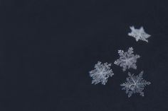 Sweet Snowflakes Photograph Print by Carrie Ann Grippo-Pike on Fine Art America