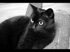 Abraham Hicks - Understanding Your Cats Behaviour - YouTube