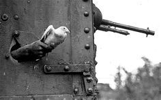 Honoured: the WW1 pigeons who earned their wings. A new exhibition highlights the contribution made by messenger pigeons in both world wars, when they were credited with saving thousands of lives and altering the course of battles. http://www.telegraph.co.uk/history/world-war-one/10566025/Honoured-the-WW1-pigeons-who-earned-their-wings.html