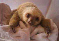 sloth :D