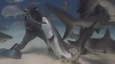 Sensational moment diver reaches into mouth of shark to release hook