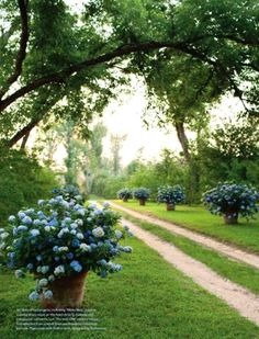 Huge pots of flowers/flowering bushes for outdoor wedding or outdoor reception, or anywhere guests would  walk outdoors/demarcate entry