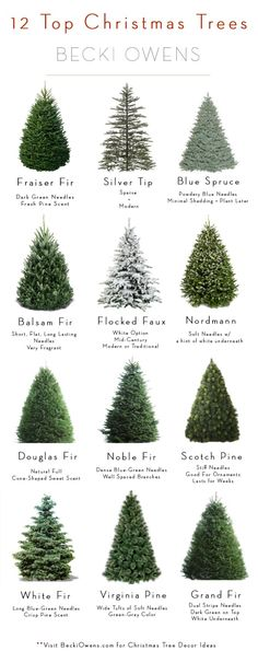 All About Christmas Trees - Guide + DecoratingBECKI OWENS - - We're making Christmas tree decorating easy with inspirations, an introduction to 12 popular varieties, and a mix and match guide to make decorating easy. Lowes Christmas Trees, Narrow Christmas Tree, Christmas Tree Guide, Types Of Christmas Trees, Christmas Tree Storage, Black Christmas Trees, How To Make Christmas Tree, Christmas Tree Inspiration, Ribbon On Christmas Tree