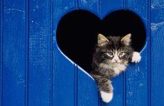 Adorable Cat Wallpapers - Meshlo