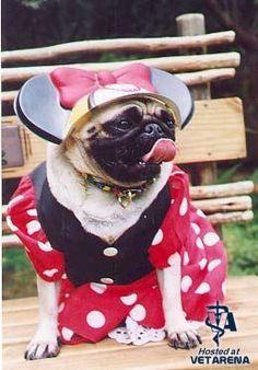 funny dog pics pack21