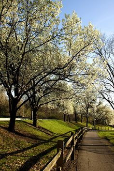Spring at Schenley Park in Pittsburgh by Melissa @ PPC, via Flickr