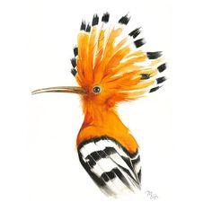 Hoopoe Bird Painting Hoopoe Watercolor Print Bird by MiraGuerquin