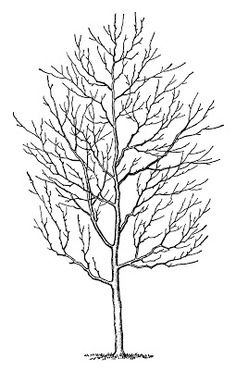 Vintage Clip Art - Winter Trees - The Graphics Fairy