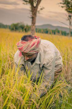 Indian Farmer by Gajendra Kumar / Village Photography, Man Photography, Photography Basics, Indian Photography, Street Photography, Shiva Tattoo Design, Fern Wallpaper, Farm Lifestyle, Indian Photoshoot