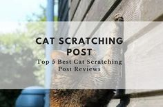 Here's how to stop your cat scratching your furniture. Read detailed reviews of the best cat scratching posts and best cat scratchers