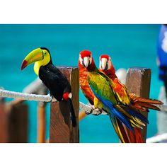 Tropical Birdies!
