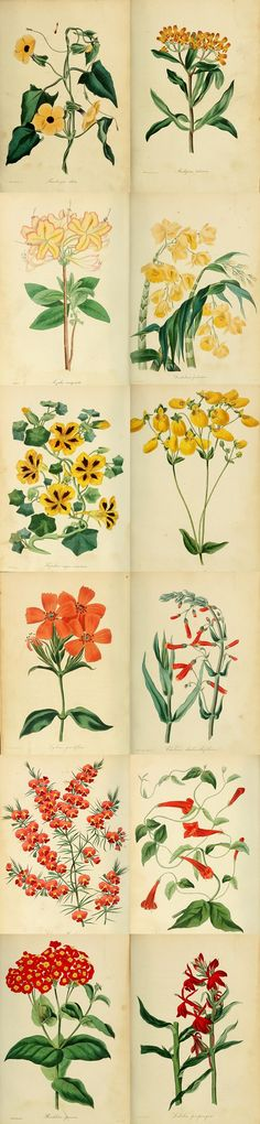Read Paxton's Book of Botany which has lots of vintage illustrations and gardening information