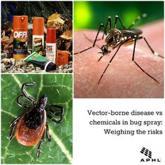 Vector-borne disease vs chemicals in bug spray: Weighing the risks | www.aphlblog.org