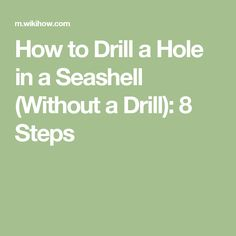 How to Drill a Hole in a Seashell (Without a Drill): 8 Steps