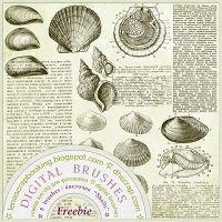 Photoshop brushes for designing digital collages, photobooks & photoalbums.  8 brushes