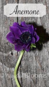 Connecticut cut flower guide