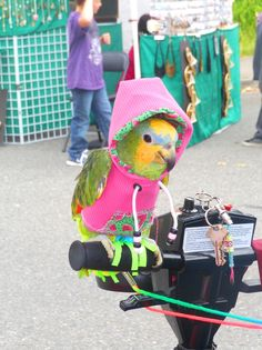 We had a great time at #AquaFest in Lake Stevens Washington! Check out this cute bird we found!