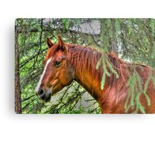 Beautiful Sorrel Mare and Evergreen Branches Photo Metal Print